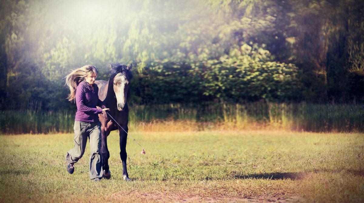 Animal Wisdom – Integration 101